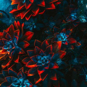 freelance-artist-floral-4.jpg